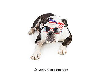 bouledogue, porter, drapeau américain, accessoires