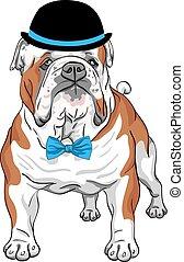 bouledogue, race, chien, vecteur, hipster, anglaise
