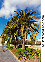 boulevard with palm trees against the blue sky and cloud