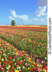 Boundless field sown with flowers - Boundless kibbutz field...