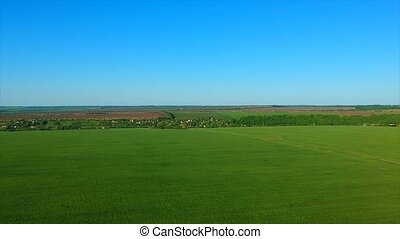 boundless green rice field against distant village by...
