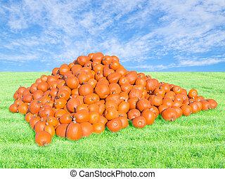Bountiful harvest on pumpkin patch - Bountiful harvest on ...