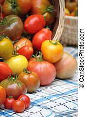 bounty of organic heritage tomatoes