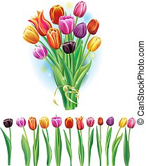 Bouquet and border with multicolor tulips