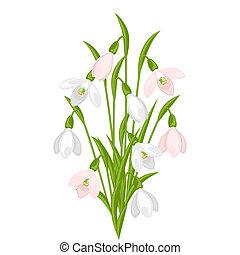 bouquet, arrière-plan., blanc, perce-neige, fleurs