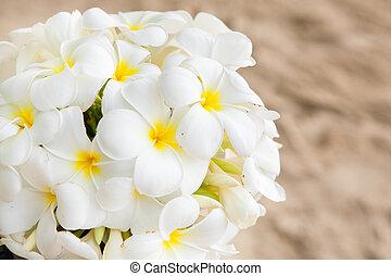 bouquet blomst, i, plumeria