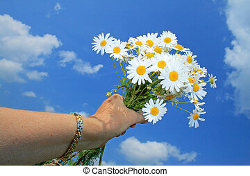 bouquet, camomile