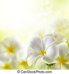 bouquet, de, plumeria, fleurs