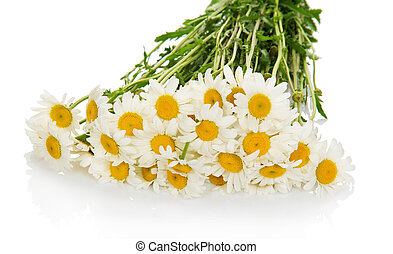 bouquet, doux, blanc, camomile