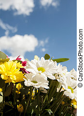 bouquet, field of flowers in spring with cloudy sky background