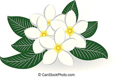 bouquet fiore, frangipani, plumeria, matrimonio, o