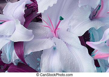 bouquet, fleur, arrière-plan.