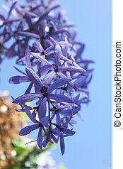 bouquet, fleur, lilas, violet