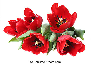 bouquet fleur, tulipes, -, printemps, rouges