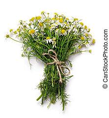 bouquet, fleurs, camomille