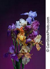 bouquet, fleurs, iris