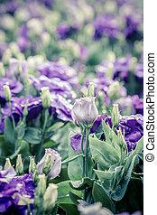 bouquet, fleurs, lisianthus, violet