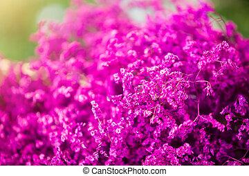 bouquet, fleurs pourpres