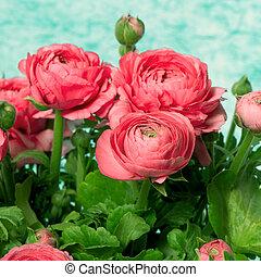 bouquet, fleurs roses, ranunculus