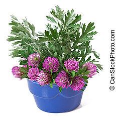bouquet, fleurs sauvages