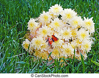 Bouquet from yellow asters with butterfly on green grass.