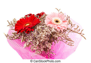 bouquet, gerbera, isolé