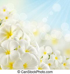 bouquet, i, plumeria, blomster