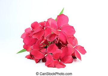 bouquet, i, rød, flowers.