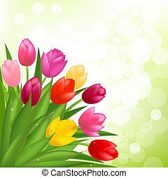 bouquet, i, tulipaner