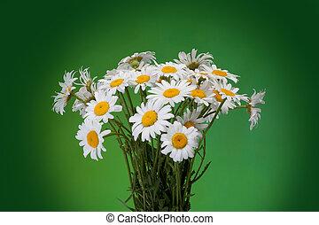 bouquet, isolé, arrière-plan vert, fleurs fraîches, pâquerettes