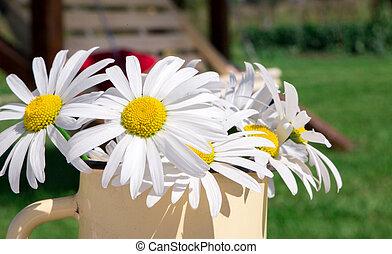 bouquet, jardin, fond, chamomiles