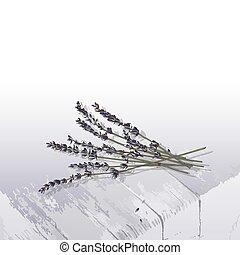 bouquet, lavande, illustration, bois, vecteur, table
