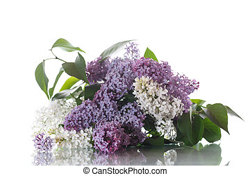 bouquet, lilas