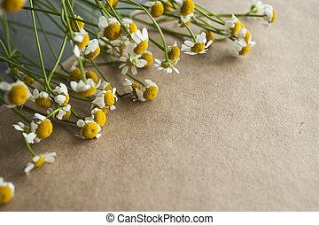 bouquet, métier, papier, fond, camomile