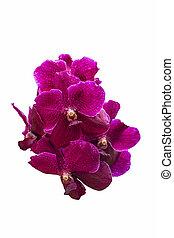 Bouquet magenta orchid flower