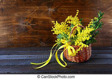 bouquet, mimosa, printemps