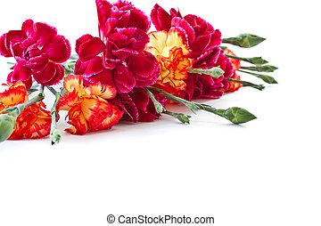 bouquet, oeillets, rouges