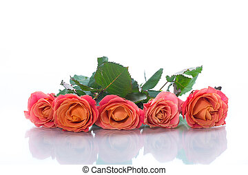 bouquet of beautiful pink roses isolated on white
