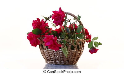 bouquet of beautiful red roses isolated on white background