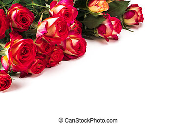bouquet of beautiful red roses on a white background.