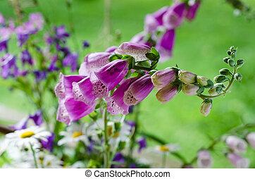 Bouquet of beautiful summer flowers, close-up