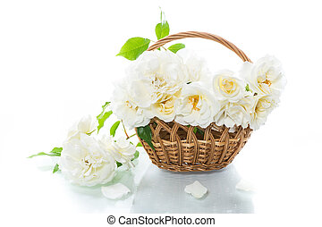 bouquet of beautiful summer white roses on white background