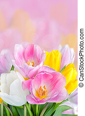Bouquet of beautiful tulips flowers