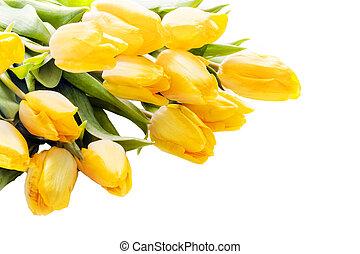 Bouquet of beautiful vivid yellow tulips lying diagonally...