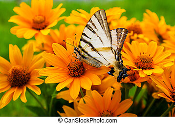 Bouquet of Black Eyed Susan yellow flowers with a butterfly on the grass