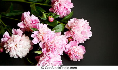 bouquet of blooming peonies on black background - bouquet of...