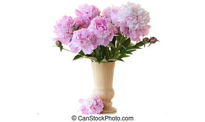 bouquet of blooming peonies on white background - bouquet of...