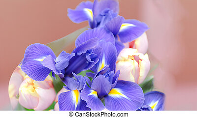 bouquet of blue irises on a pink background with place for text.