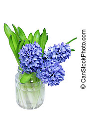 Bouquet of bright blue hyacinth flowers in a vase on chalkboard as a spring concept