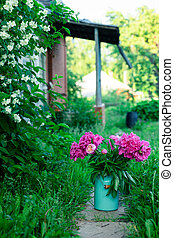 Bouquet of bright pink peonies in milk can on a path leading to porch of a house, garden view